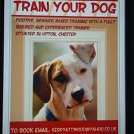 train your dog image