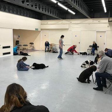 Image of a dog training